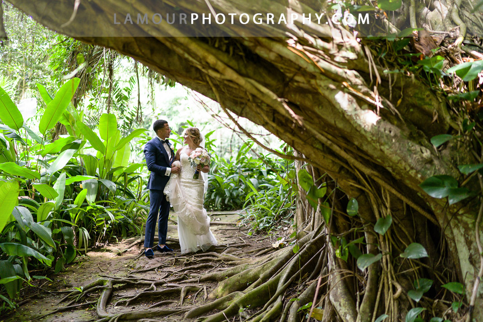 Hawaii wedding photos under a huge banyan tree on Oahu